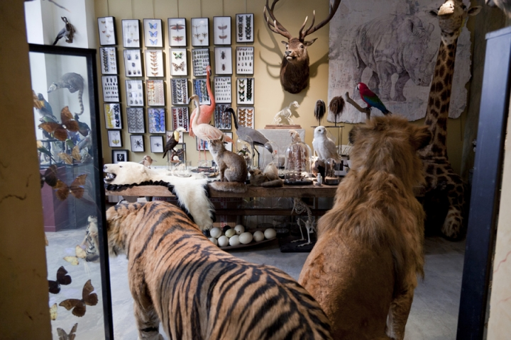 design et nature showroom in paris wildnature lions and wolves. Black Bedroom Furniture Sets. Home Design Ideas